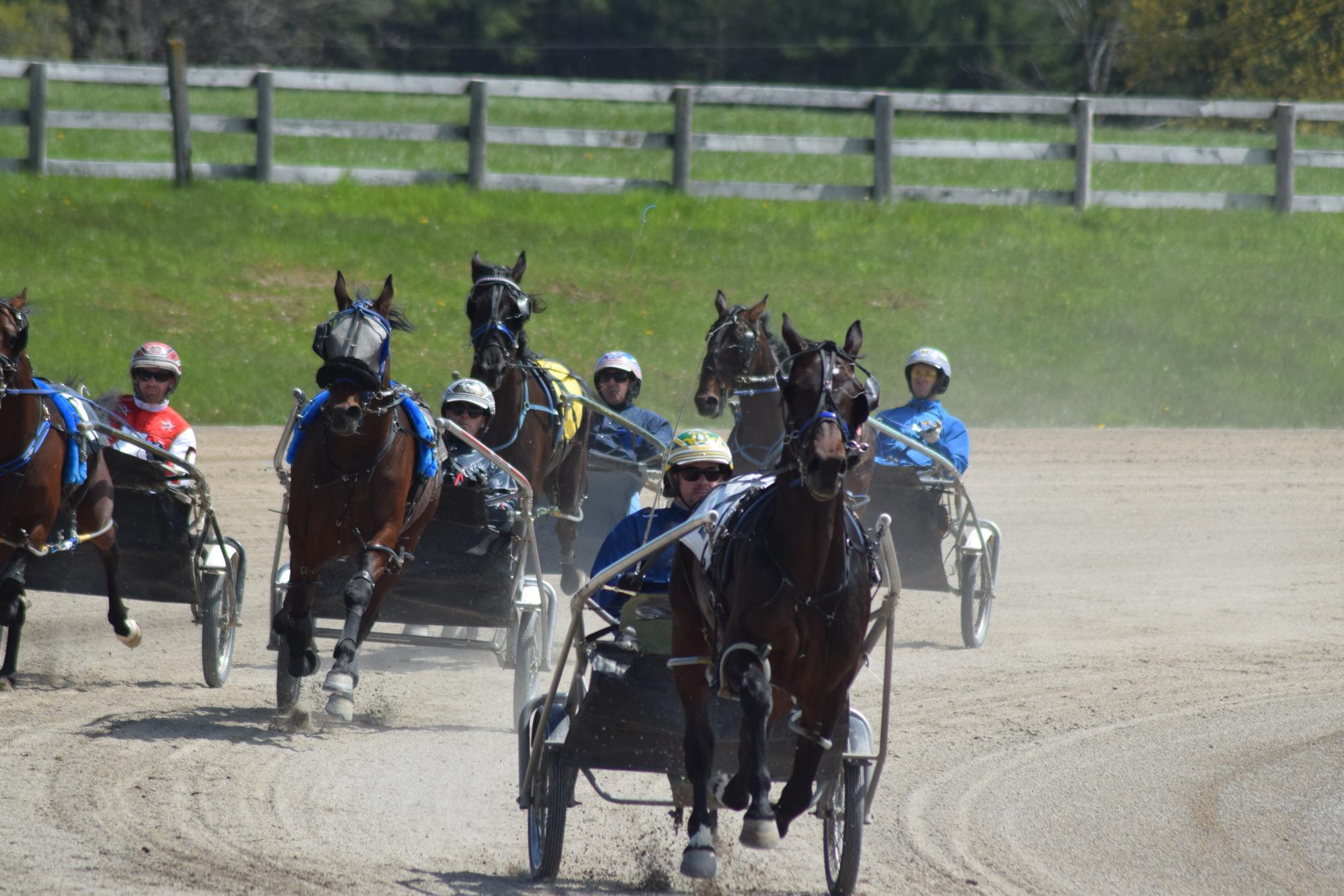 horse racing harness standardbred