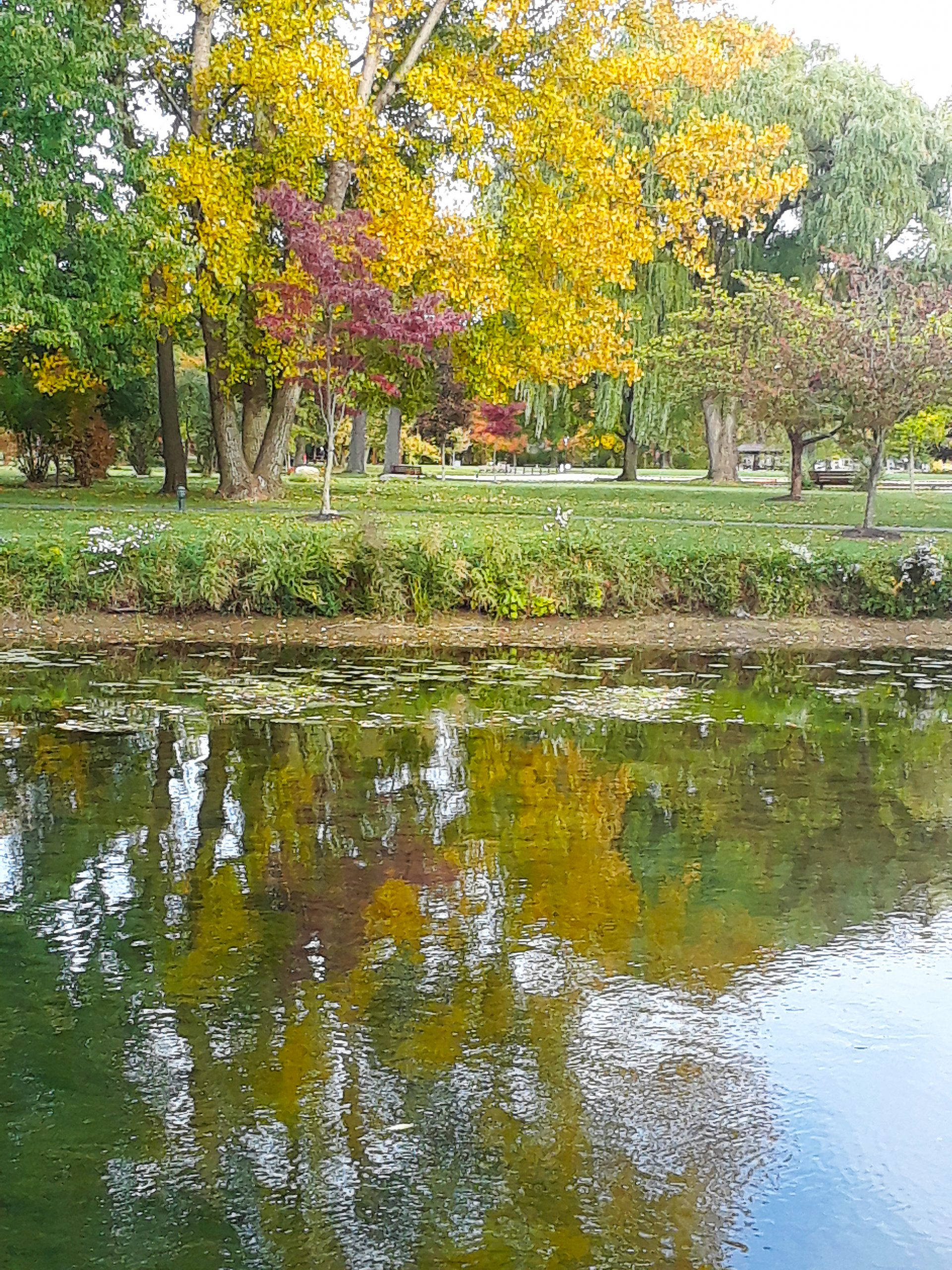 fall foliage vitale park lakeview ny