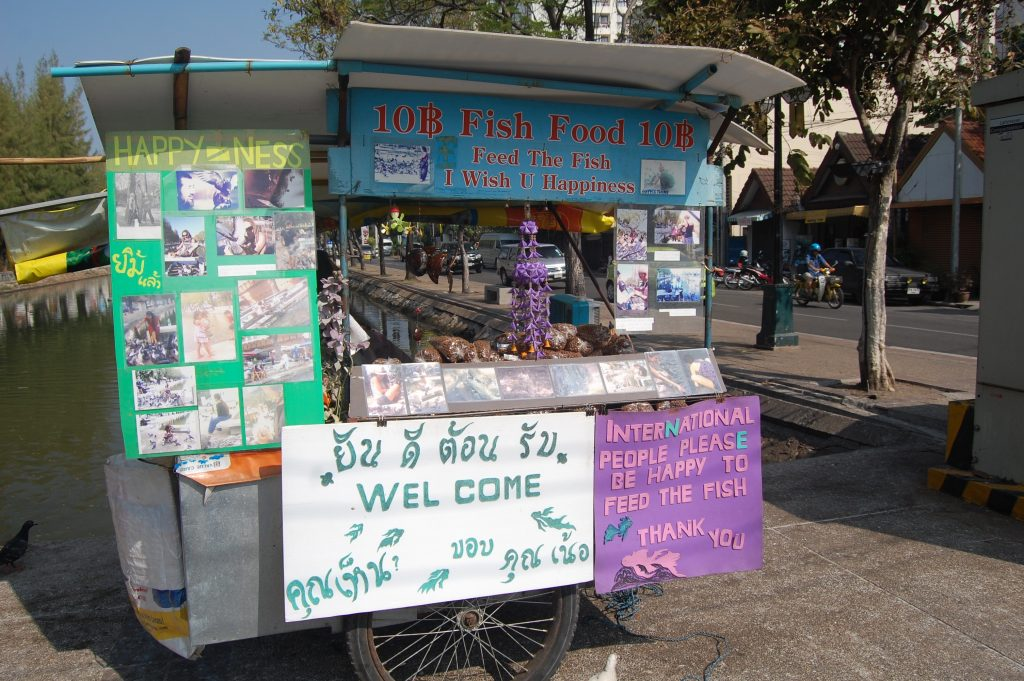 Fish Food Vendor Chiang Mai walking tour thailand